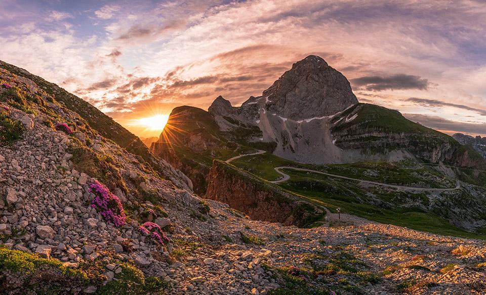 Mangart in roza cvetlice na poletno jutro