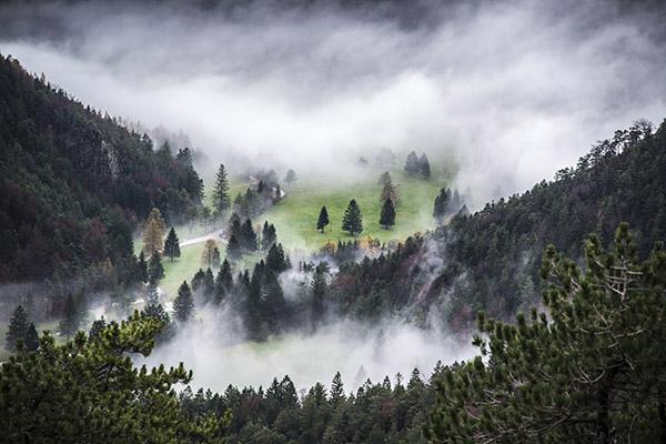 dark-mystic-forest