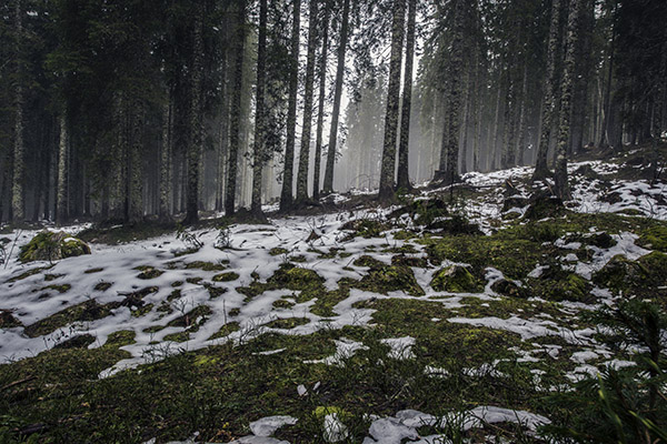 mystic-forest-of-pokljuka
