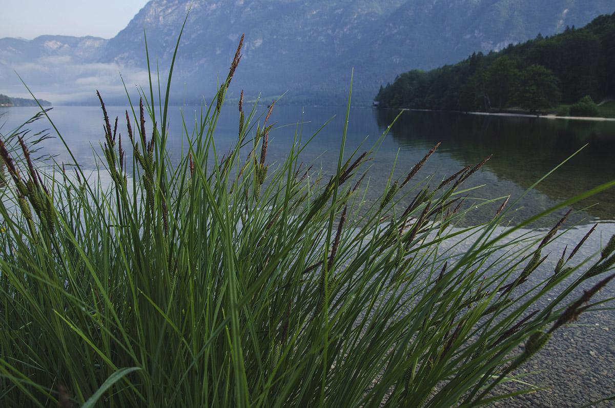 grass-at-the-lake