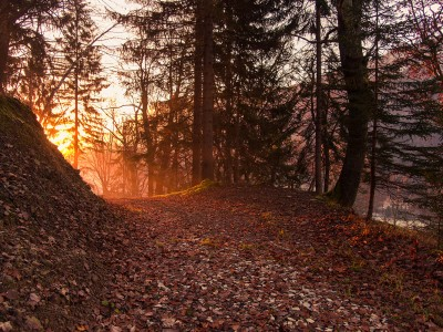 Misty sunrise in the forest. Beautiful and mystic atmosphere in