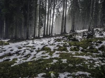 misty-forest-of-pokljuka