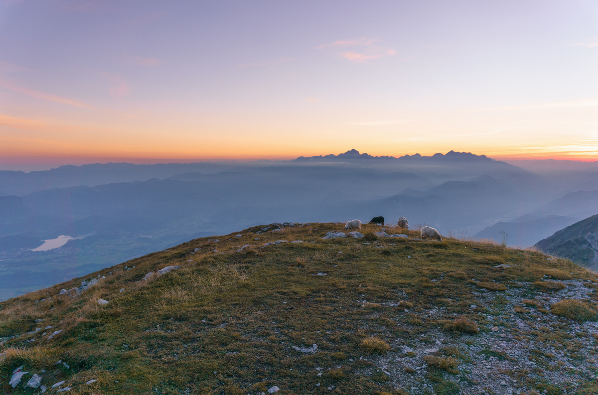 Sheeps enjoying beautiful sunset in the mountains in Slovenia.