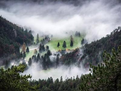 zavrsnica-misty-forest