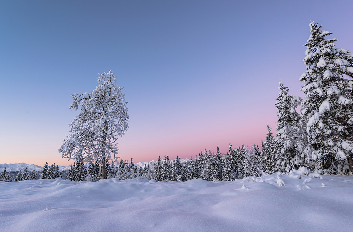 Early morning in the winter forest with blue and purple tones
