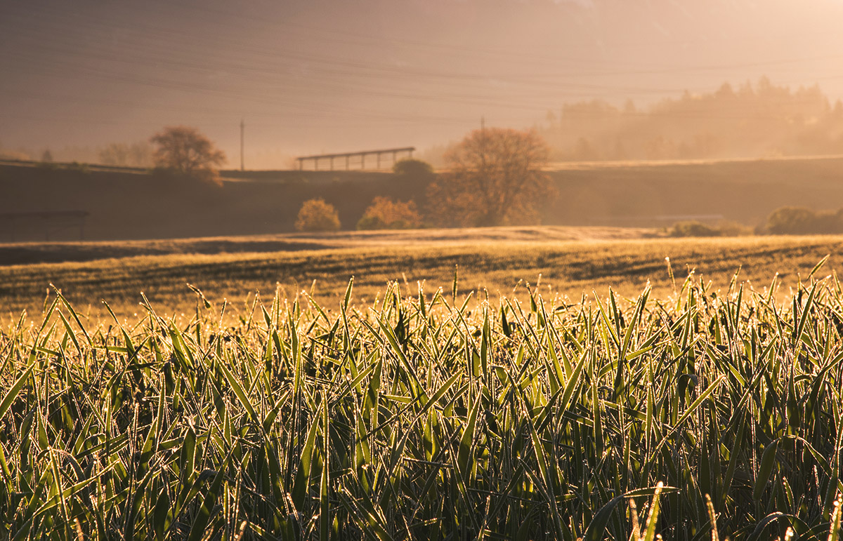 Misty morning in rural countryside of Slovenia