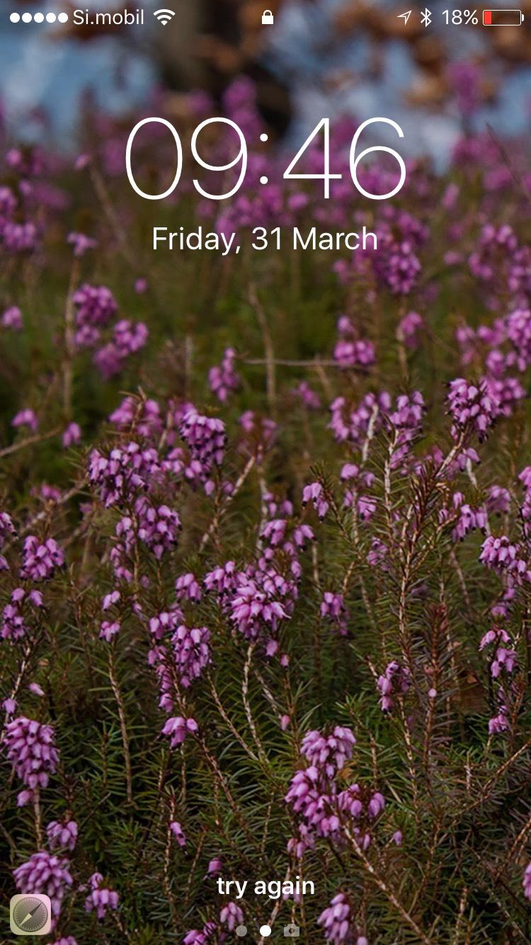 Dreamy Pixel Free Iphone Wallpaper Pink Spring Flowers Dreamy Pixel