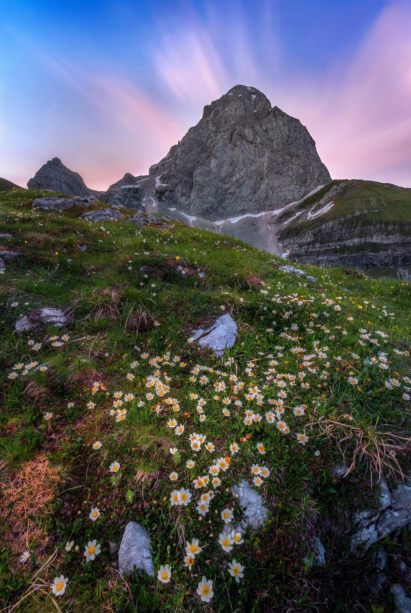 Dreamy Pixel Mountain Flowers Under Mt Mangart Dreamy
