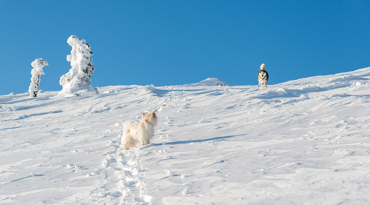 Dogs playing in the winter landscape