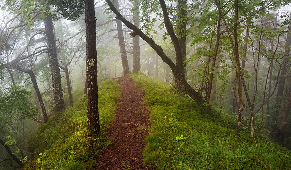 Pot proti vrhu Smolnika