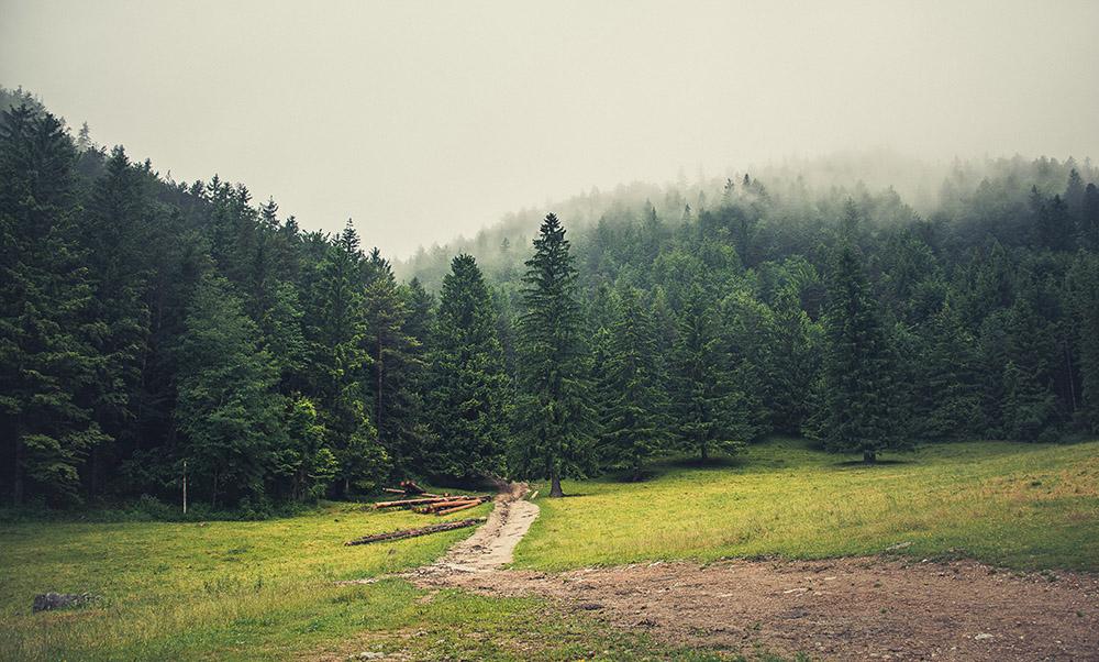 Meglen gozd in Smolnik v ozadju