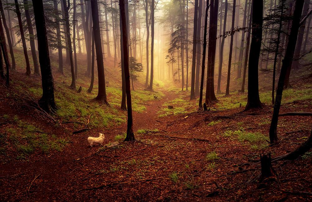 Moj kuža pozira sredi gozda