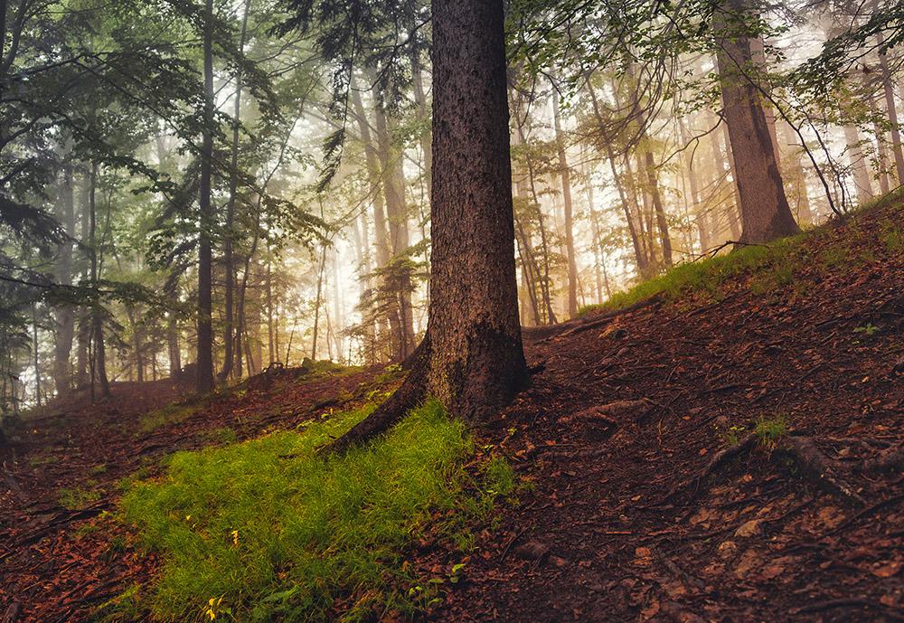 Temačna atmosfera v meglenem gozdu