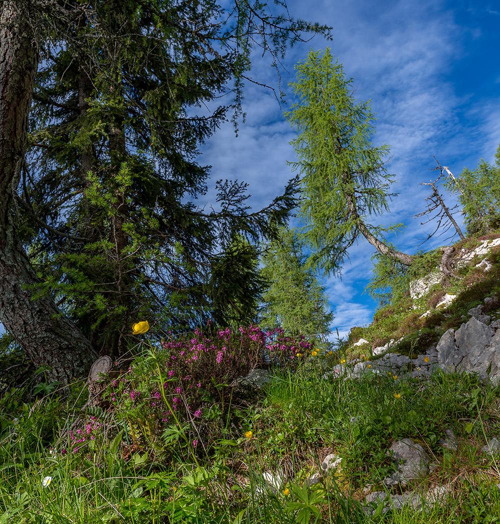 Cvetlice v Triglavskem narodnem parku