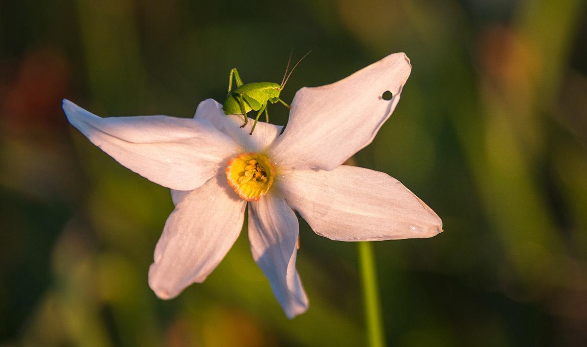 Tudi kobilica uživa v jutranji svetlobi