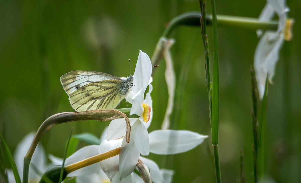 Lahko je dom tudi metulju