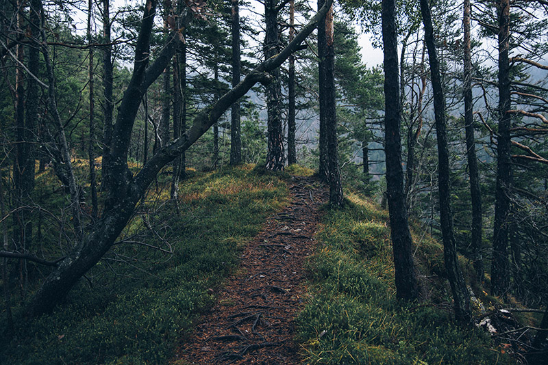 dark-forest-path-sma