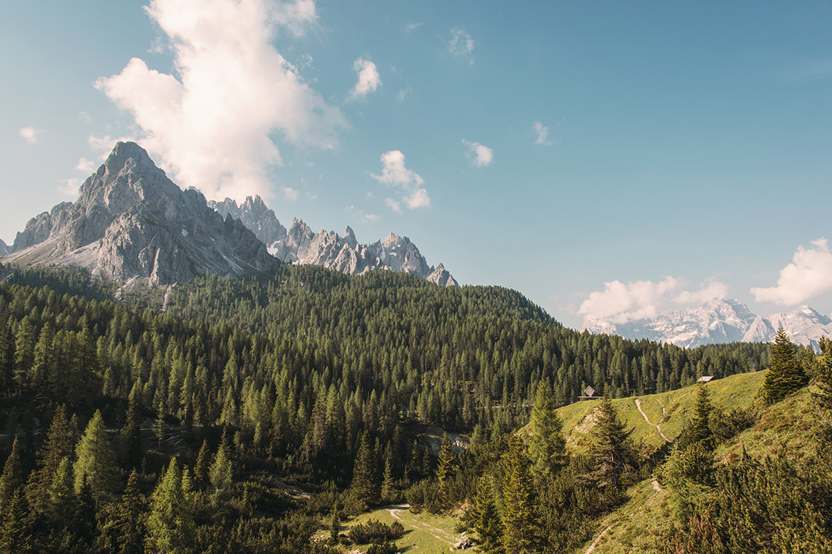 mountains-forest-panorama