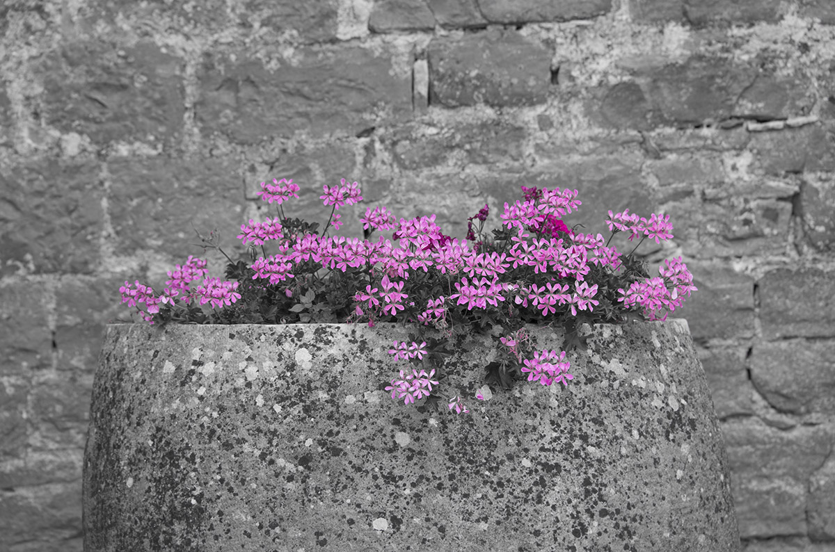 pink-flowers-grey-wall