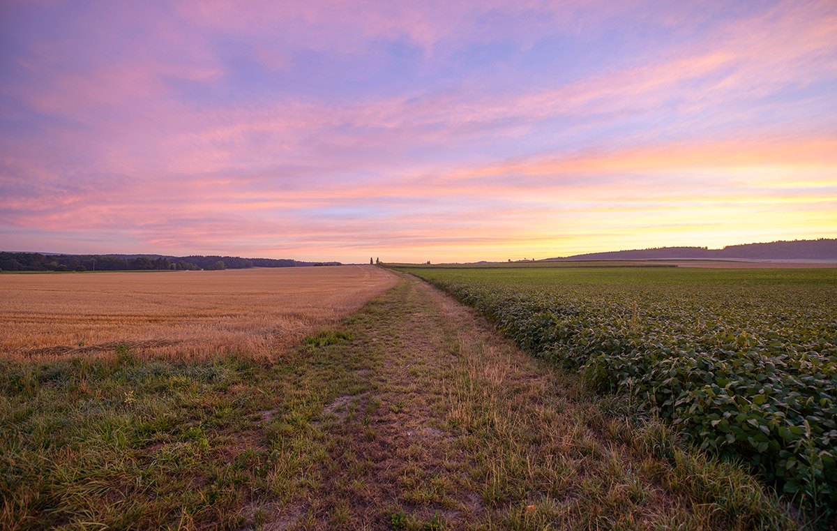 purple-sunrise-on-the-fields-germany-featured