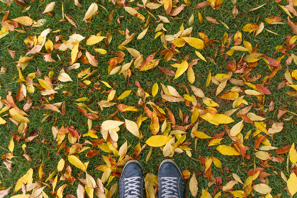 walk-in-the-autumn-leaves