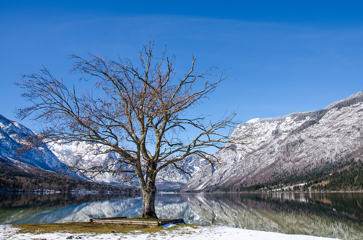 bohinj-winter-morning