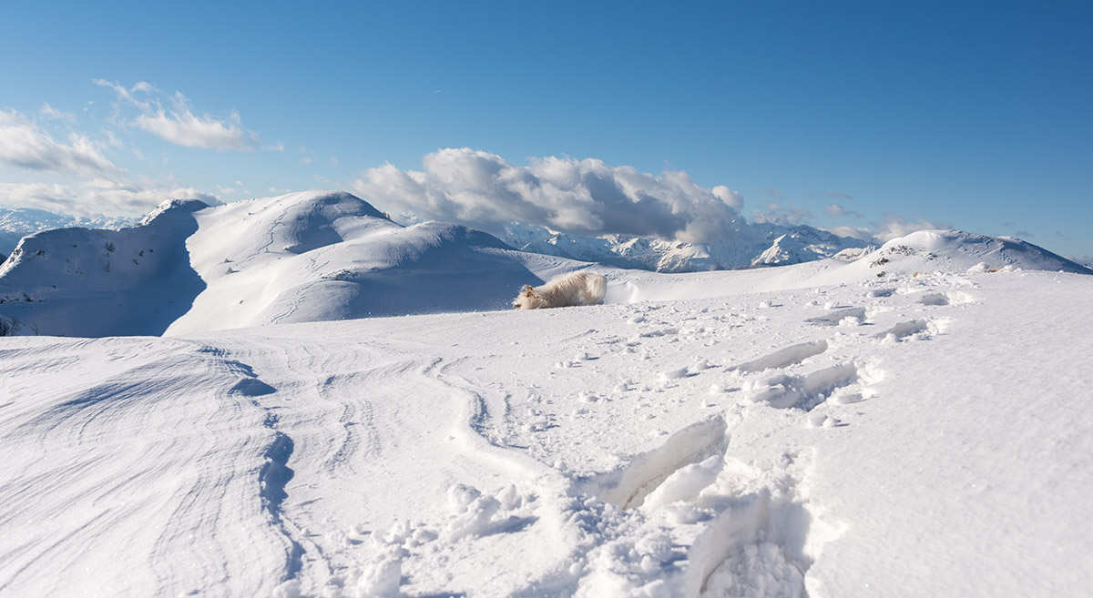 Cute white dog playing in the winter mountain landscape.